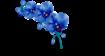 ORCHIDEE DIENSTLEISTUNGEN